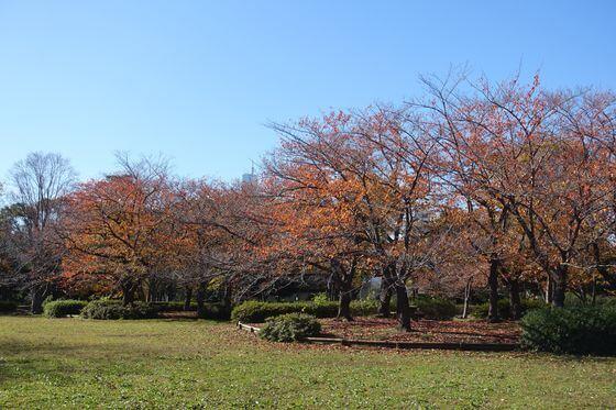 猿江恩賜公園 桜 紅葉