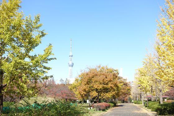 猿江恩賜公園 紅葉