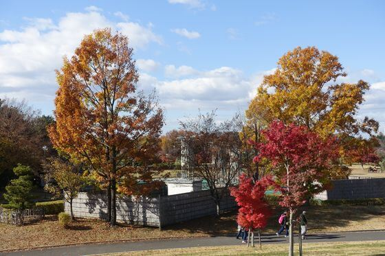 館林 つつじが岡公園 紅葉