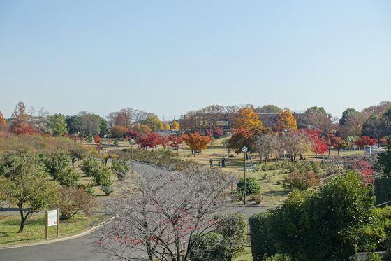 館林市つつじが岡公園 紅葉