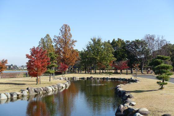 館林市つつじが岡公園 水生植物池