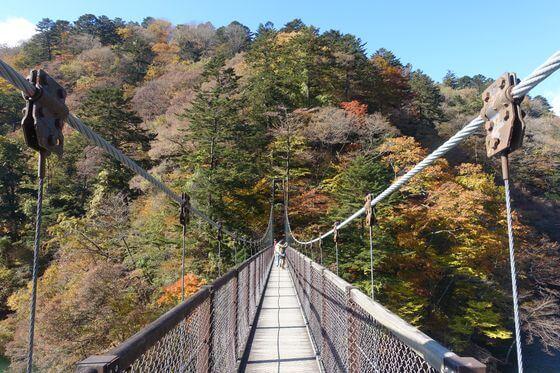 那須 回顧の吊橋 紅葉