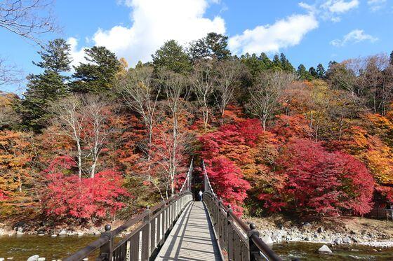 那須 紅の吊橋 紅葉