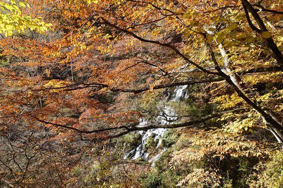 裏見の滝 秋