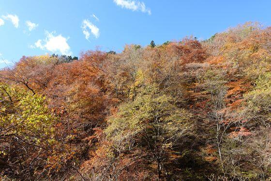 裏見の滝 紅葉
