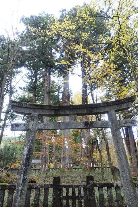 滝尾三本杉
