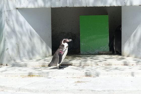 羽村市動物公園 ペンギン