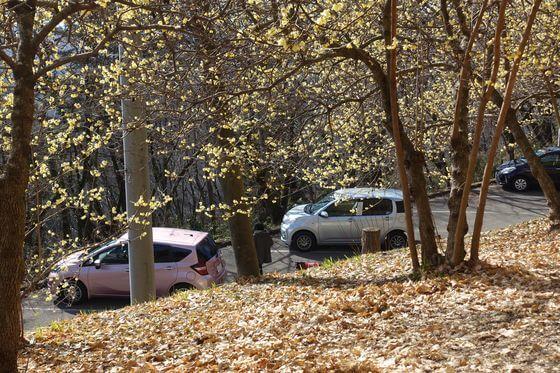 羽黒山 ロウバイ 駐車場