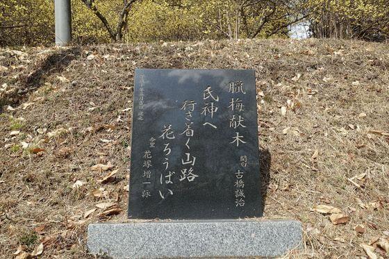 栃木県 ロウバイ