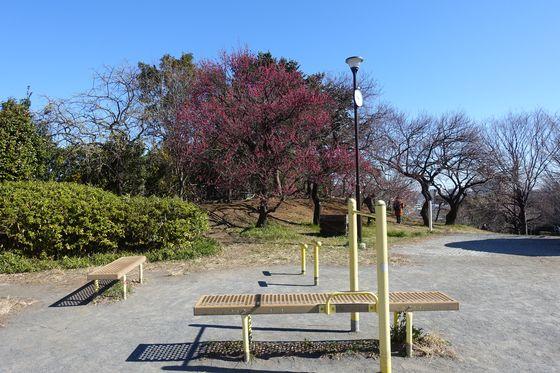 日吉公園 紅梅