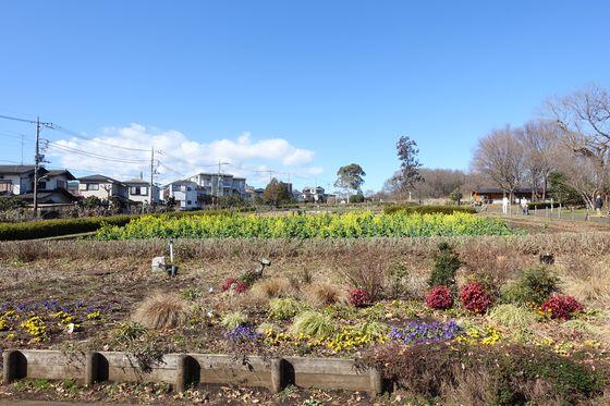小宮公園 菜の花 場所