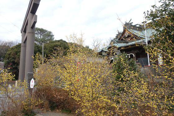 ロウバイ 雷電神社