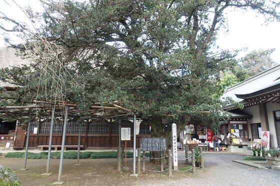 茂林寺 ラカンマキ