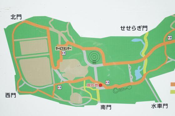 林試の森公園 アジサイ 場所