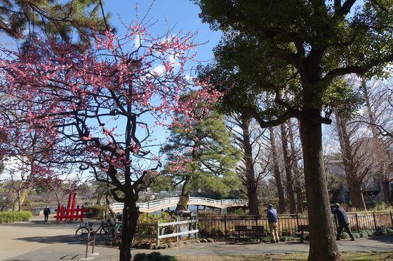 千束八幡神社 紅梅