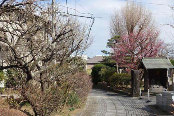 鎌倉 梅 穴場