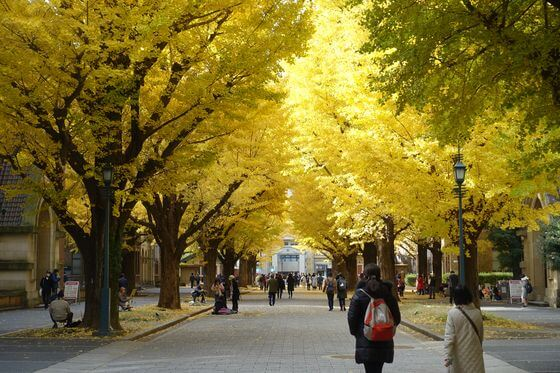 東京大学 銀杏並木