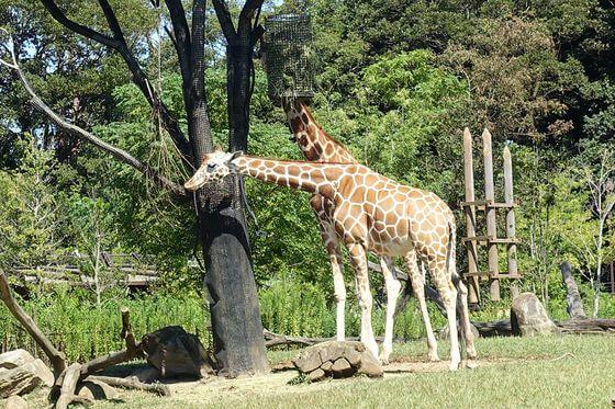 よこはま動物園ズーラシア アクセス