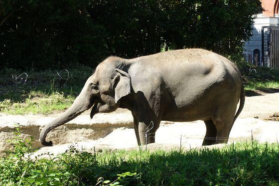 よこはま動物園ズーラシア ゾウ