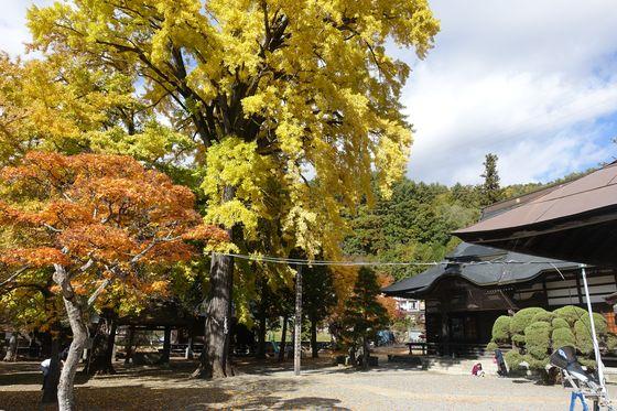 仏法寺 銀杏