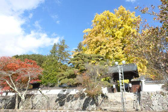 仏法紹隆寺 銀杏