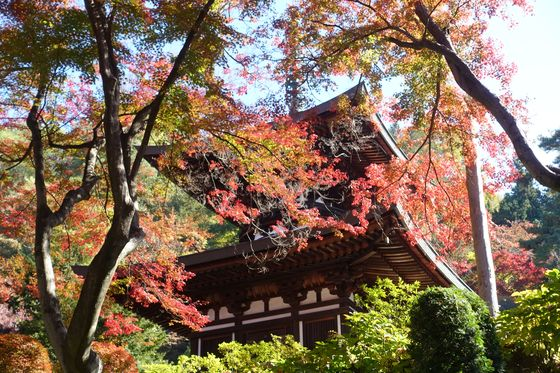 温泉寺 諏訪 紅葉