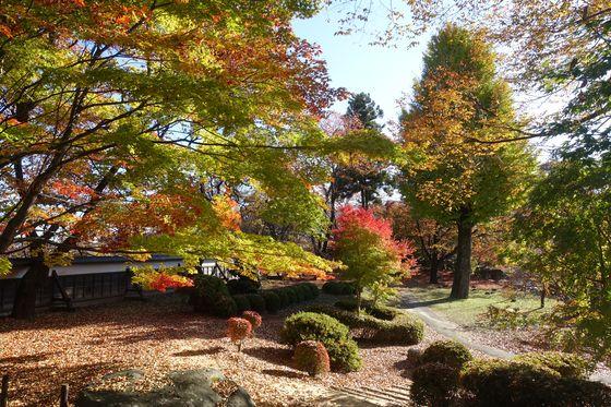 高島公園 モミジ