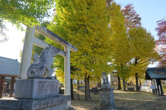 諏訪護国神社 紅葉