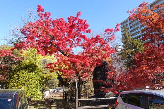 諏訪 片倉館 紅葉