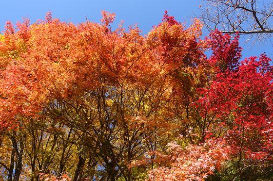 立石公園 諏訪 紅葉 現在