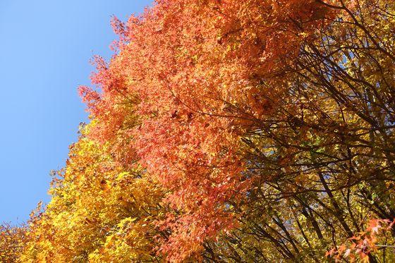 立石公園 長野 紅葉