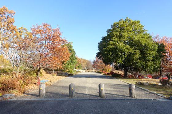 松本市アルプス公園 紅葉