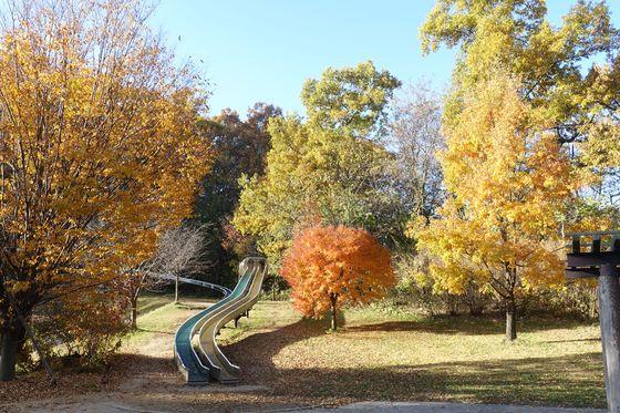 アルプス公園 松本 子供広場 紅葉