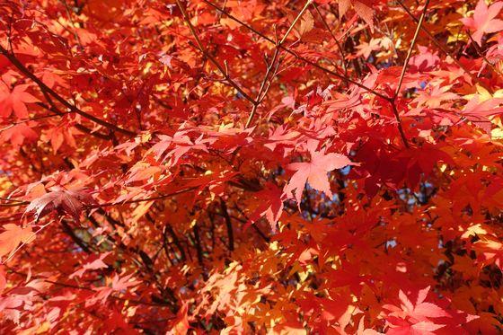アルプス公園 松本 紅葉 現在