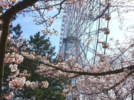 葛西臨海公園 江戸川区 桜