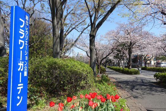 総合レクリエーション公園フラワーガーデン 江戸川区 桜