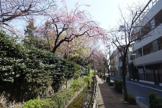 密蔵院 大田区 桜