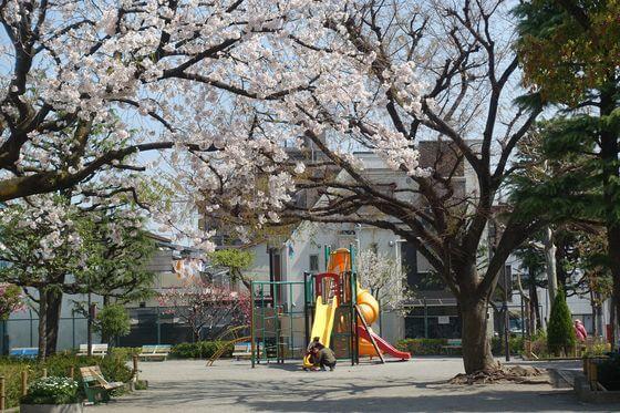南蒲公園 大田区 桜