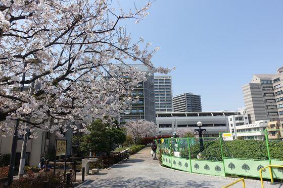 夫婦橋親水公園 大田区 桜