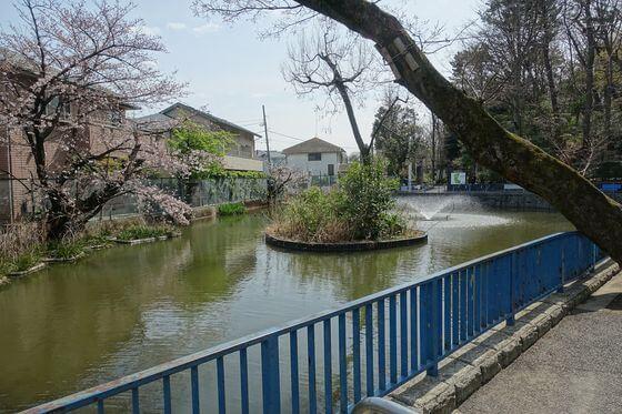 本門寺公園 大田区 桜