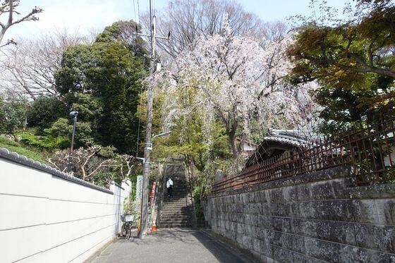 照栄院 大田区 桜