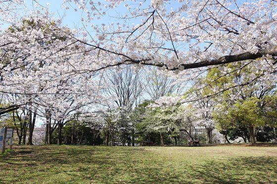 平和の広場 大田区 桜
