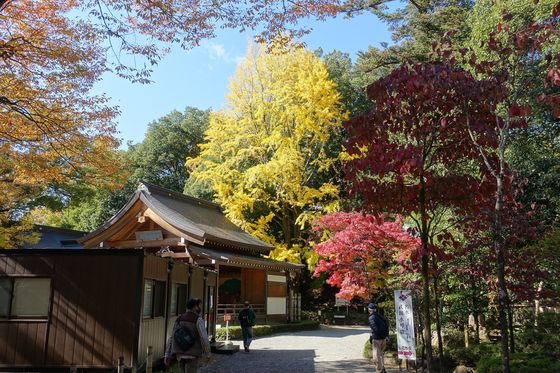 武田神社 銀杏