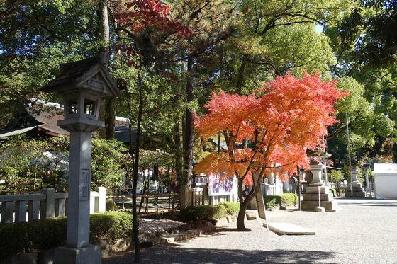 武田神社 楓