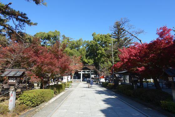 武田神社 モミジ