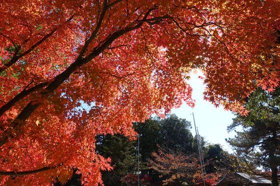 武田神社 紅葉 現在