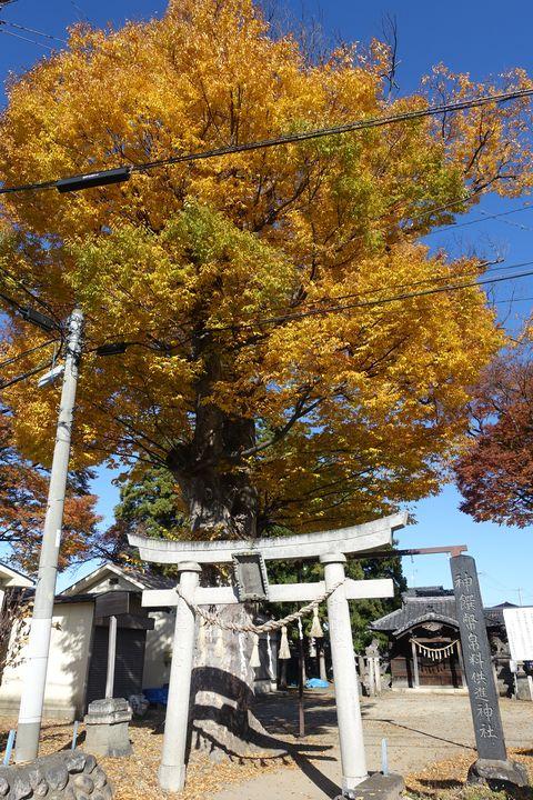 紅葉 横田神社 松本市