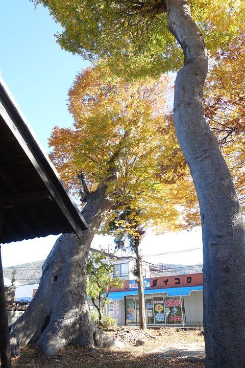 横田神社 長野 紅葉
