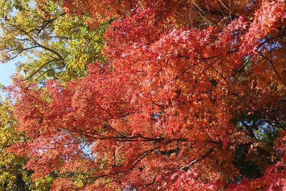 愛宕山こどもの国 紅葉 現在