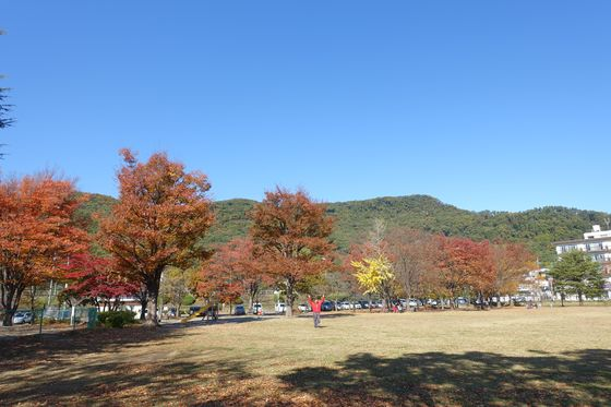 緑が丘スポーツ公園 秋